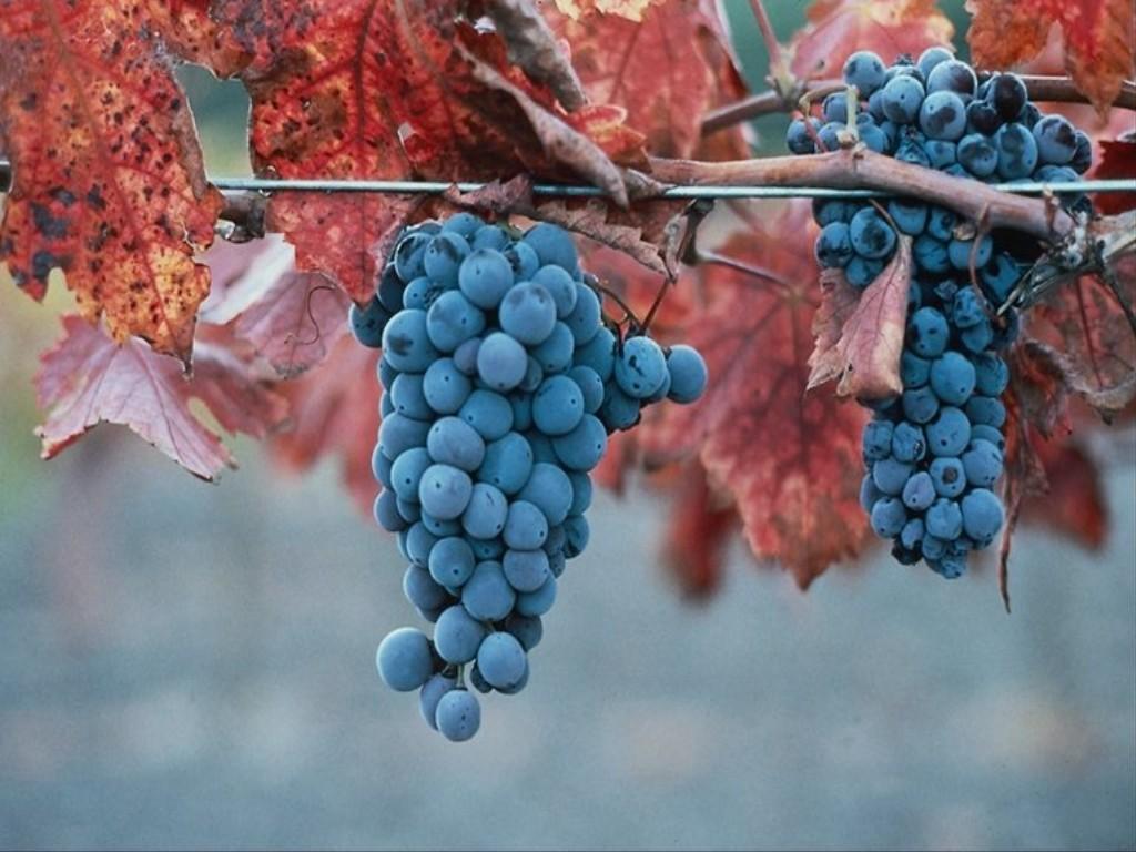 Когда брат ключарь отворил, крестьянин протянул ему гроздь великолепного винограда