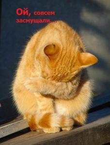 279288_ya_stesnyayus_kot.thumb.jpg.2d5fb85808643e5e4b5e71eae699d902.jpg