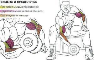 koncentrirovannyj-podem-na-biceps_6.jpg