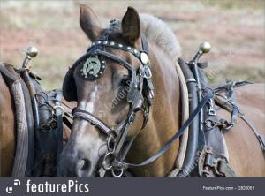 horse-with-harness-stock-photo-1820051.jpg