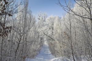 Под пеленой мороза - копия.JPG
